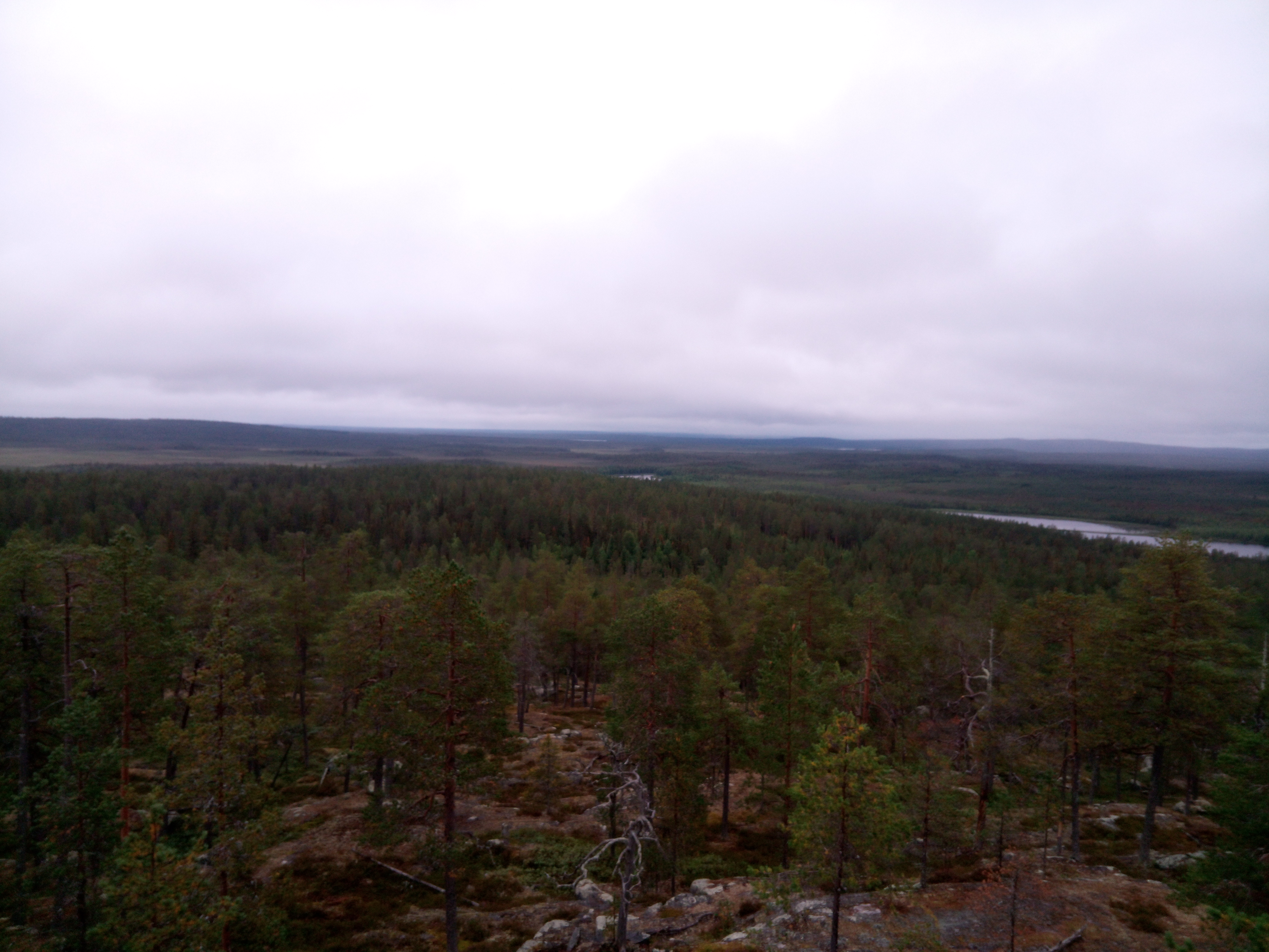 lapland forest